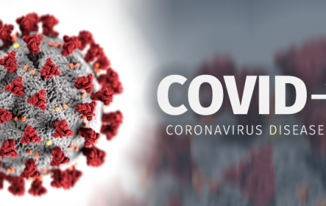 A Google image that shows what the virus itself looks like